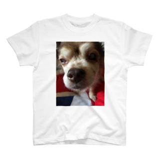 ちょいオコビュティカ Tシャツ