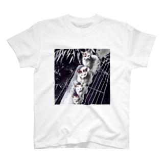 JTコレクション Tシャツ