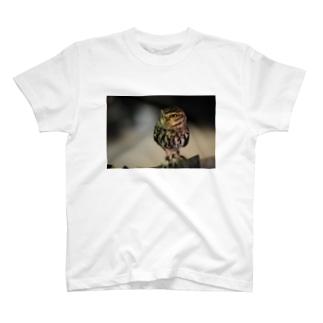 フクロウ2016 Tシャツ