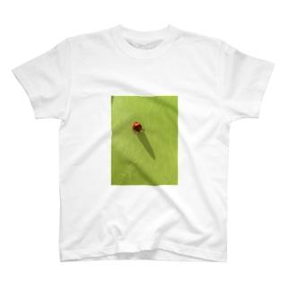 おおきなテントウムシ Tシャツ