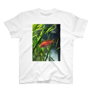 赤い魚 Tシャツ
