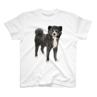 秋田犬【虎毛】 Tシャツ