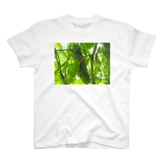 緑のゴ Tシャツ