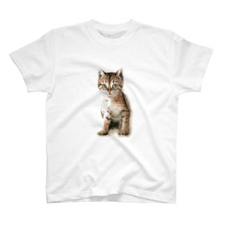 キジトラ子猫 Tシャツ