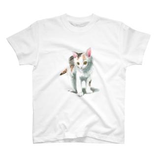白三毛子猫 Tシャツ