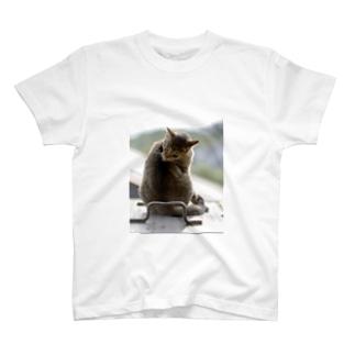 けづくろいねこ Tシャツ