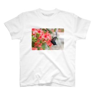 カラスアゲハ Tシャツ