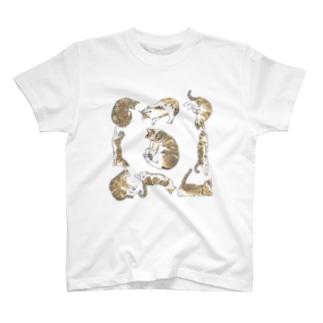 #今日のふぅさん その1 Tシャツ