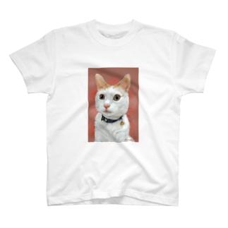 ノアちゃん Tシャツ