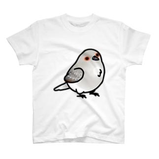Chubby Bird 鳩 Tシャツ