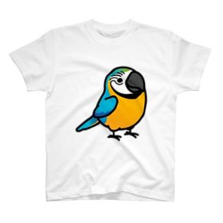 Chubby Bird ルリコンゴウインコ Tシャツ