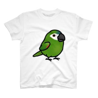 Chubby Bird コミドリコンゴウインコ Tシャツ