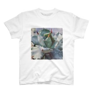 アガベ T-shirts