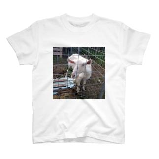 チャーミングなやぎさん T-shirts