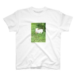 ある日の午後の白ヤギさん T-shirts