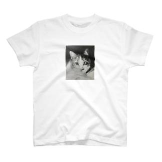 TAMA Tシャツ T-shirts