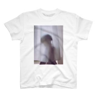 カーテン Tシャツ