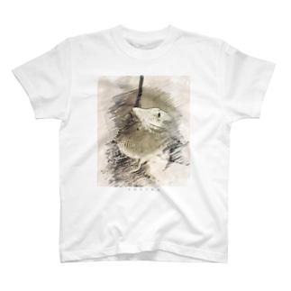 フトアゴデッサン T-shirts