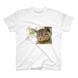 猫のファンサービス T-shirts