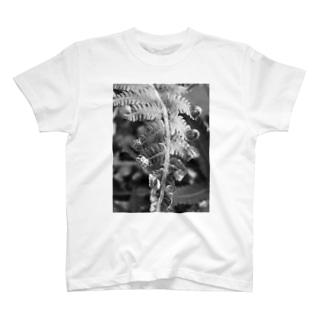 沖縄産のシダ T-shirts