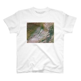 BANICCO T-shirts