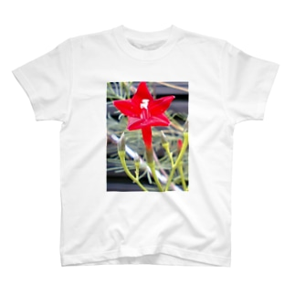 Dreamscapeの思い出・・・開いて・・・ T-shirts