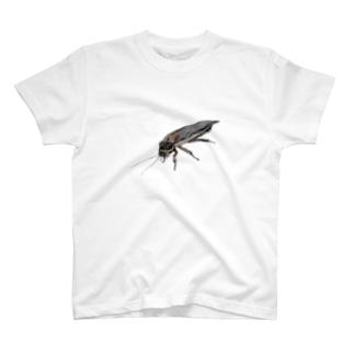 デュビア(成虫・オス) T-shirts