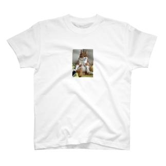 にゃん全容 T-shirts