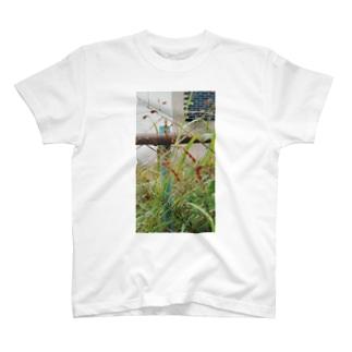 隠れん坊 T-shirts