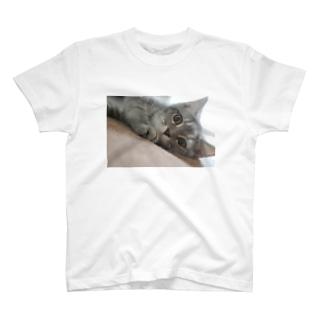 ネコのみぃちゃん1 T-shirts