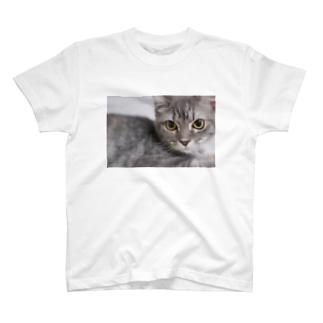 ネコのみぃちゃんグッズ3 T-shirts