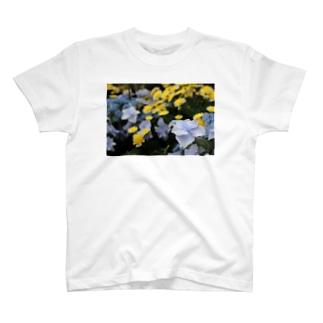 青ガクアジサイ × 黄??? T-shirts