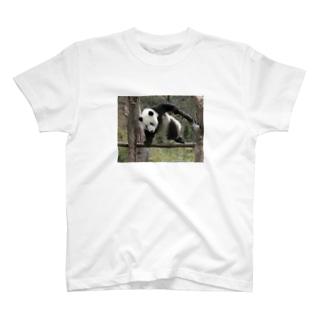 パンダ(笹食ってる場合じゃない) T-shirts