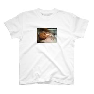 公園のトイレに猫ちゃん発見! T-shirts