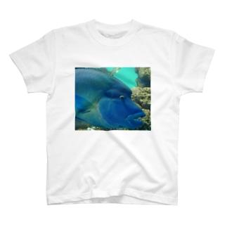 Fish! T-shirts