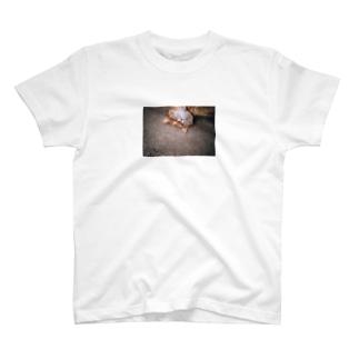 コンクリ猫 T-shirts