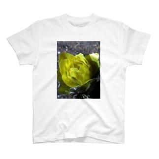 真冬の温もり T-shirts