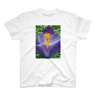 早春の朝 T-shirts