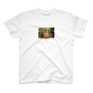 私は鳥~するどい目線 T-shirts