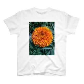 ポンポン咲きっ!! T-shirts