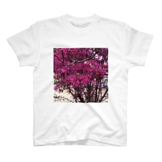 ピンク T-shirts