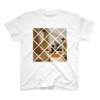 board T-shirts