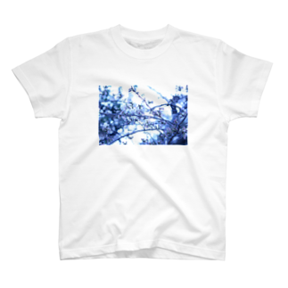 Kengo Kitajimaの桜 T-shirts