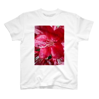 こんなにも鮮やかに・・・ T-shirts