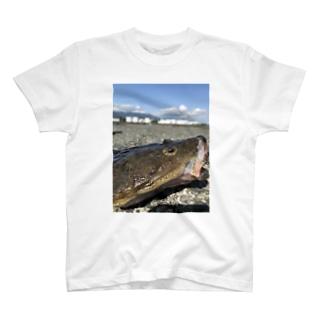 マゴチ T-shirts