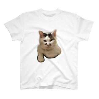家ネコのまろん T-shirts