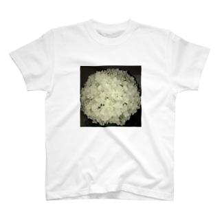 6月 T-shirts