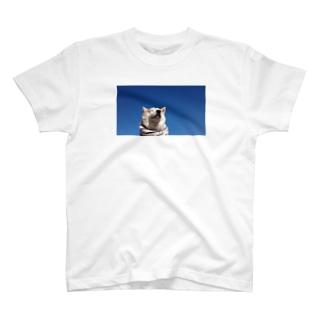 豆柴ビーンと青空 T-shirts