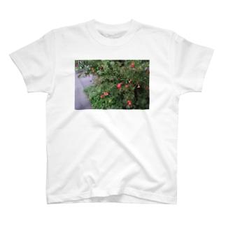🥀 T-shirts