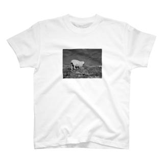 平原と羊 T-shirts